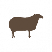 Lamb Dog Treats